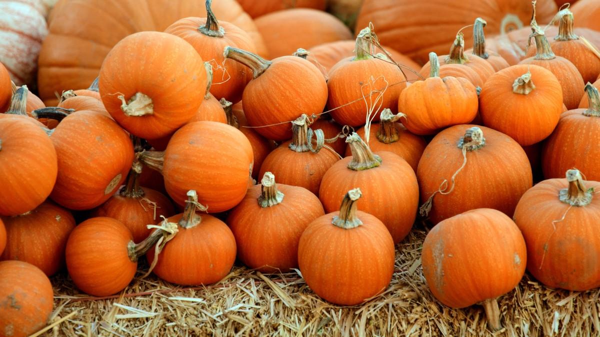 7 tips för bästa Halloweenfesten!
